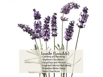 Kneipp Lavender Bubble Bath, 13.52 fl oz - Image 4