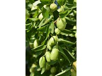 US Organic Jojoba Oil 2 oz (60ml) - Image 7
