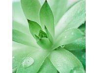 Babo Botanicals Miracle Moisturizing Baby Cream, 2 Fluid - Image 5