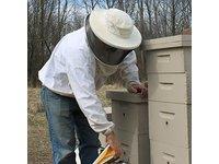 Beessential Honey Balm Beeswax Lip Balm - Image 11