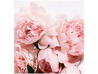 L'Oreal Paris Age Perfect Rosy Tone Moisturizer, 1.7 oz - Image 15